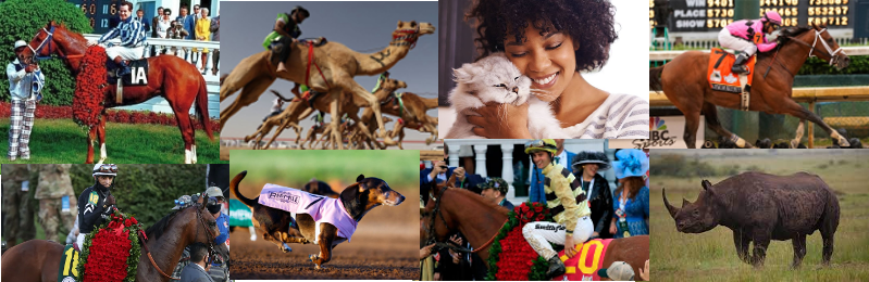PEMF for Horses and Racing Animals